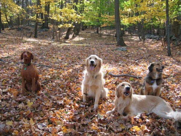 Group of Dogs sitting in leaves
