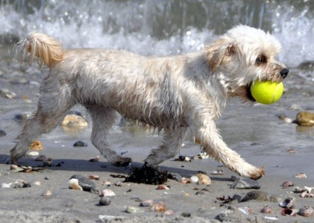 Dog with ball on beach